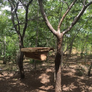 Beehive in woodlot -beekeeping using simple top-bar hives is being introduced as an income generation project